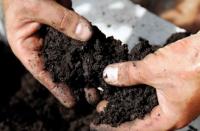 soil nzs